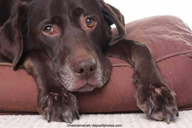Hat Ihr alter Hund noch Lebensqualität