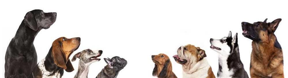 senior-hunde.de