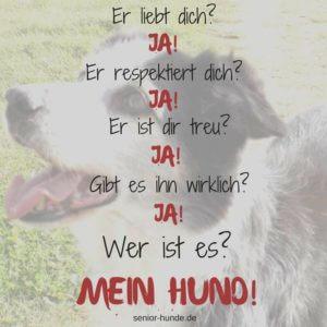 Hundealter in Menschenjahren