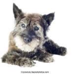 Blinder Hund