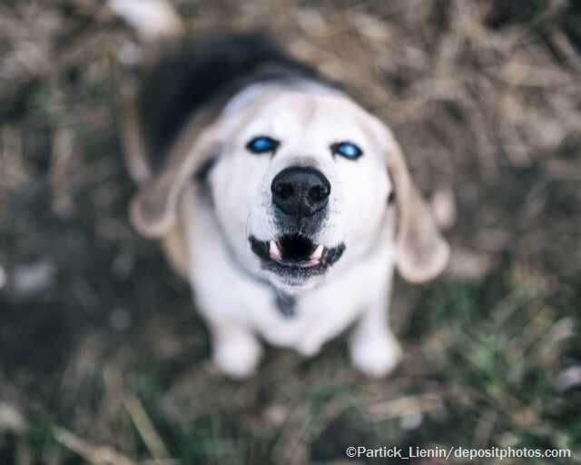 Zubehör für blinde Hunde