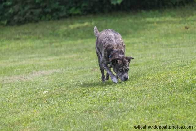 Spielen mit blinden Hunden