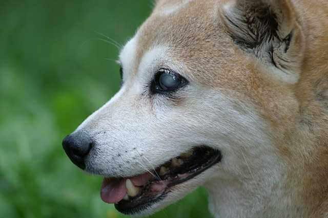 Vorurteile über blinde hunde