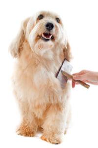 Hund im Sommer bürsten