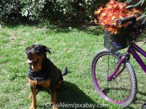 Keine Radtour mit Hund in der hitze
