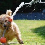 Sommerzubehör für Hunde