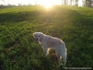 Früh morgens oder abends - die perfekte Zeit für sommerliche Hunde-Spaziergänge nicht so heiß