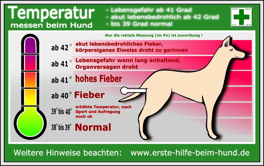 Quelle: http://www.erste-hilfe-beim-hund.de/