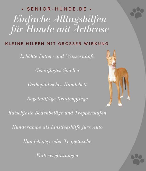 Einfache Alltagshilfen für Hunde mit Arthrose