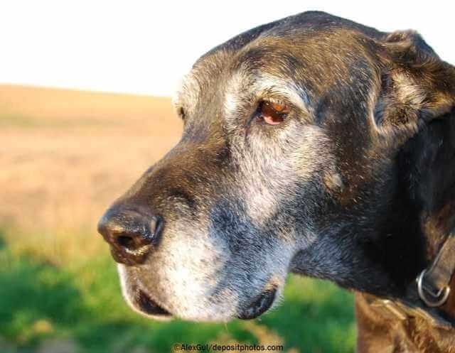 Hilfsmittel für Hunde mit Arthrose