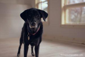 Krebs Beim Hund 12 Symptome Auf Die Sie Achten Sollten Senior
