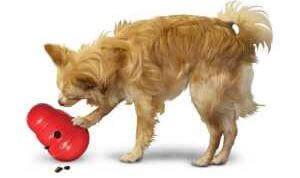 Spielzeug f r blinde hunde senior - Blinde fensterscheiben kann man reinigen ...
