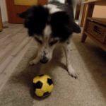 Mit alten Hunden spielen