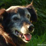 Wenn alte Hunde reden könnten