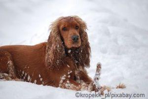 Ein gefrorenes Stöckchen splittert leicht und kann den Hund verletzen