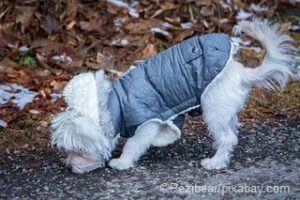 Ein Hundemantel schützt vor Kälte und Nässe