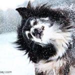 Winterzubehör für Hunde