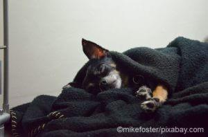 Hund erkältet - braucht Wärme