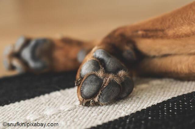 Pfotenschutz Hund