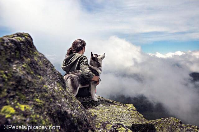 hund erlösen ohne tierarzt