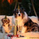 Neujahrsvorsätze für Hunde