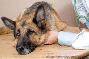 Wann den Hund einschläfern lassen