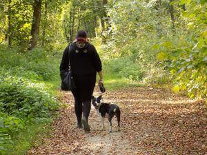 Blähungen Hund - Spaziergang hilft