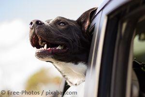 Mit Hunderampe sicher ins Auto