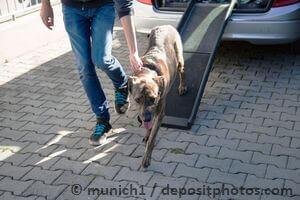 Hund an Hunderampe gewöhnen